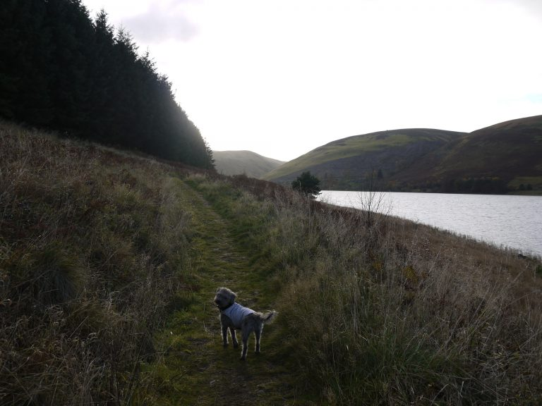 7 Mile loop around St Mary's Loch